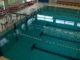 Zwembad 't Dolfijntje