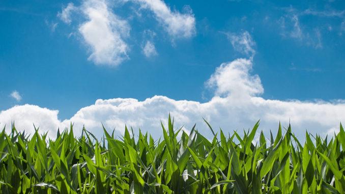 landbouwramp