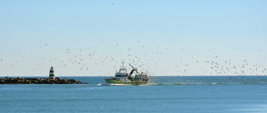 Visbestanden in de Noordzee