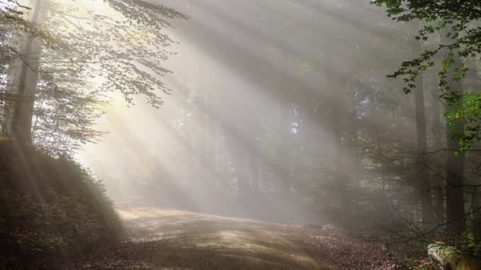 Toegankelijkheid openbare bossen